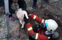 В Днепре сотрудники ГСЧС спасли кота, упавшего в колодец