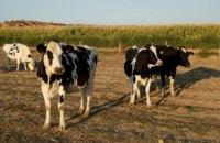 Кабмин выделит 4 млрд грн на поддержку животноводства