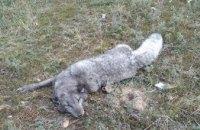 В Днепре на ж/м Приднепровск заметили неопознанное хищное животное (ФОТО)