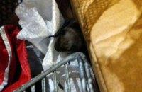 В Днепре жителей многоэтажки напугала летучая мышь (ФОТО)