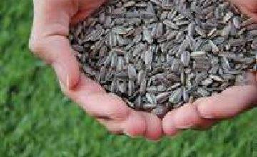 Аграрии Днепропетровщины ожидают очень низкий урожай подсолнечника и кукурузы