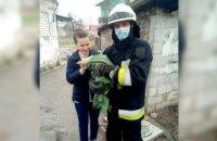 Спасатели в Днепре помогли четвероногому: кот забрался на дерево высотой 9 метров и не мог спуститься