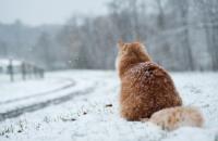 Днепропетровцев ожидает резкое похолодание и снег: прогноз погоды на следующую неделю
