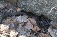 В Днепре на ж/м Победа обнаружено змеиное гнездо (ФОТО)