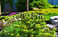 Міжнародна група компаній Бунге долучилася до озеленення міста Дніпра