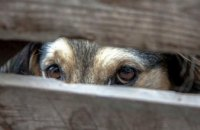 В Харькове убийцу собаки приговорили к трем годам тюрьмы (ВИДЕО)
