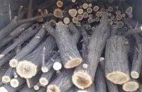 На Днепропетровщине задержали грузовое авто, полное спиленной древесины