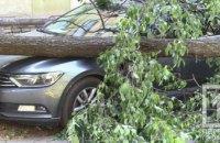 В Кривом Роге на иномарку упало дерево (ФОТО)