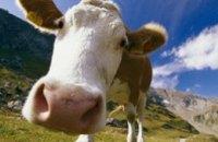 В Днепропетровске обсудили развитие молочного скотоводства