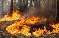 В 2018 году в лесах Днепропетровщины произошло более 100 пожаров