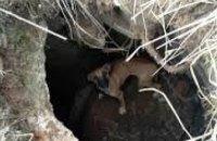 В Днепре спасатели достали собаку из ямы  (ВИДЕО)