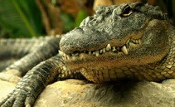 Крокодил Днепропетровского океанариума, проглотивший телефон, переживает стресс
