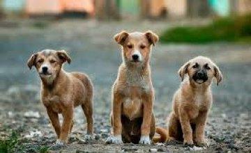 На Днепропетровщине  осудят мужчину за убийство собак