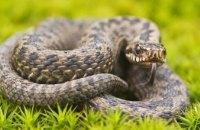 В Днепропетровской области  активизировались змеи: будьте осторожны