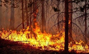 С начала 2021 года на Днепропетровщине выгорело около 800 га растительности