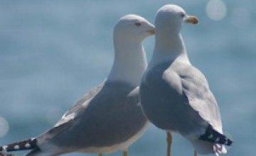 В Азовском море найдены тысячи погибших птиц