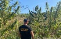 На Днепропетровщине задержали 56-летнего мужчину, который выращивал наркотики на сумму более 400 тысяч гривен