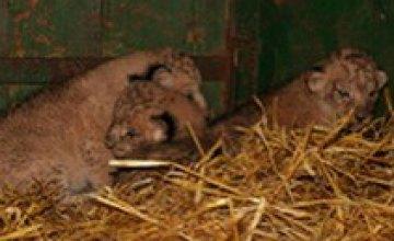 Днепропетровск не может позволить себе новый зоопарк и приют для животных