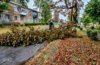 В Вольногорске дерево преградило дорогу