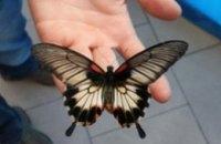Администрация Обамы встала на защиту пчел и бабочек