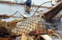 138 правопорушень, 248 кг вилученої риби — результат перших тижнів «нерестової заборони»