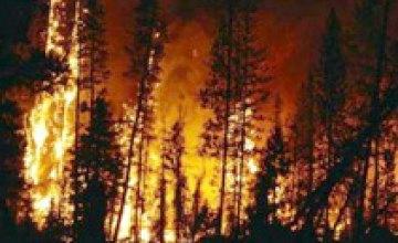 Ночью в Днепропетровской области сгорело 300 га леса