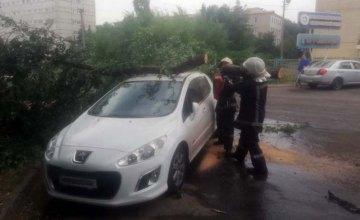 В Кривом Роге дерево упало на припаркованную иномарку