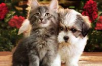 Ученые выяснили кто умнее: коты или собаки