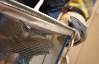 Жители Чечеловского района Днепра обнаружили у себя дома летучую мышь (ФОТО)