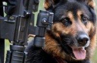 Железнодорожные мосты Приднепровской ж/д будут охранять собаки