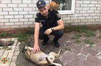Спасатели Днепропетровской области провели акцию поддержки бездомных животных (ФОТО)
