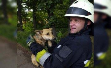 В Днепре спасли щенка, который провалился в 2-х метровую яму