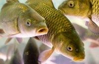 На Днепропетровщине с 1 ноября запретят вылов рыбы в зимовальных ямах