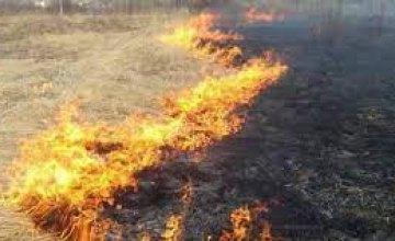 С начала года на Днепропетровщине произошло более 1,5 тысячи пожаров в экосистемах