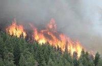 С начала года на Днепропетровщине произошло более 100 лесных пожаров