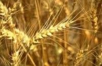 Украина собрала уже более 33 млн. т зерна