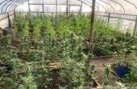 В Никополе 45-летний горожанин выращивал в теплице 355 кустов конопли