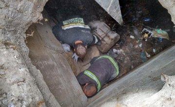 В Днепре сотрудники ГСЧС спасли собаку, упавшую в 3-х метровый люк