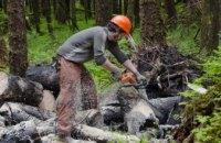 Пять лет лишения свободы за незаконную вырубку деревьев: в Петропавловском районном суде вынесен приговор