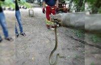 В Днепре на детской площадке обнаружили 1,5-метровую змею (ФОТО)