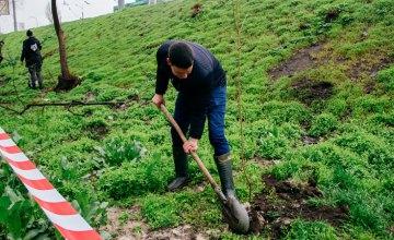 Нова зелена зона: на Січеславській Набережній висадили 50 кленів