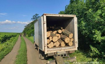 Изъяли грузовик и 40 кубов акации: в Кривом Роге пресекли незаконную вырубку леса