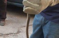 В Днепре мужчина обнаружил в гараже полуметровую змею