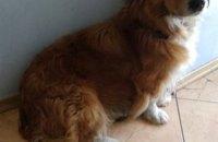 Онлайн-база потерянных животных в Днепре: собаки ищут хозяев (ФОТО)