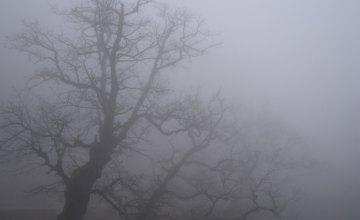 С чем связана продолжительная туманность в Днепре?