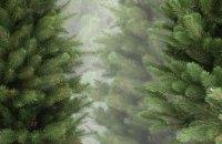 На Днепропетровщине продали более 18 тыс. новогодних елок