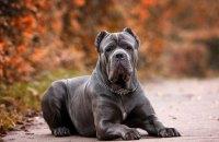 14 октября на ж/м Красный Камень состоится выставка собак