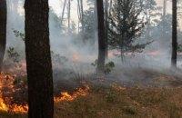 В Новомосковском районе выгорело 0,5 га соснового леса (ФОТО)