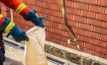 На Днепропетровщине во дворе частного дома нашли 1.5 - метровую змею