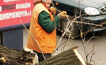 Массовый спил деревьев вдоль улицы Серова (ФОТОРЕПОРТАЖ)